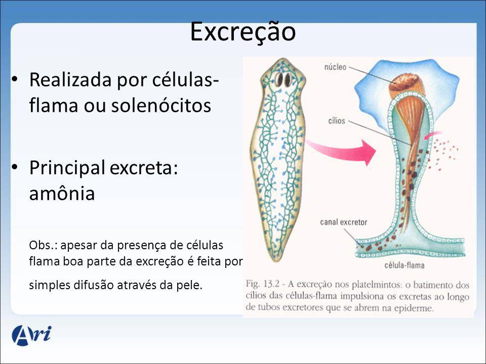 Excreção Realizada por células- flama ou solenócitos Principal excreta: amônia Obs.: apesar da presença de células flama boa parte da excreção é feita por simples difusão através da pele.