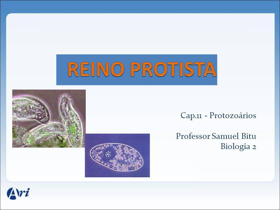 Cap.11 - Protozoários Professor Samuel Bitu Biologia 2