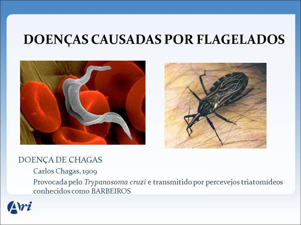 DOENÇAS CAUSADAS POR FLAGELADOS DOENÇA DE CHAGAS Carlos Chagas, 1909 Provocada pelo Trypanosoma cruzi e transmitido por percevejos triatomídeos conhec