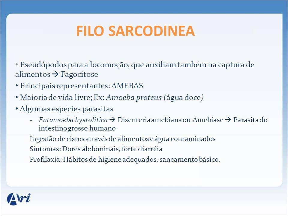 FILO SARCODINEA Pseudópodos para a locomoção, que auxiliam também na captura de alimentos Fagocitose Principais representantes: AMEBAS Maioria de vida