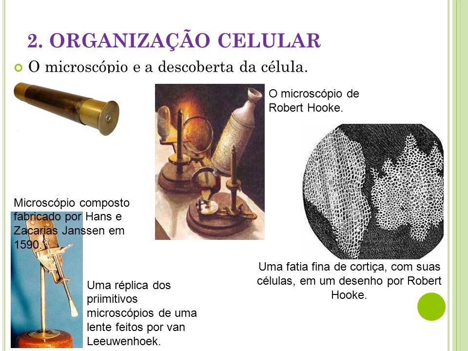 2.ORGANIZAÇÃO CELULAR O microscópio e a descoberta da célula.