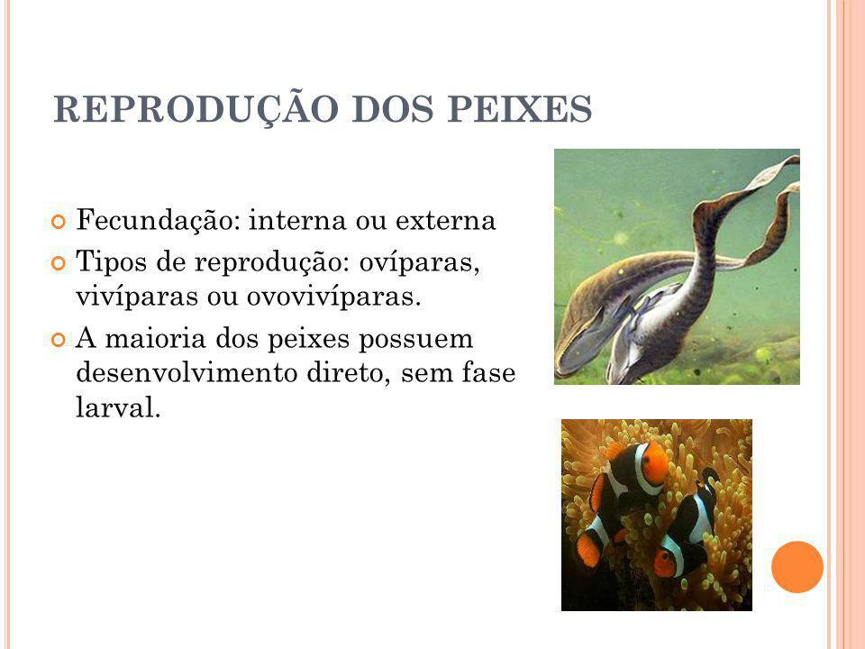 REPRODUÇÃO DOS PEIXES Fecundação: interna ou externa Tipos de reprodução: ovíparas, vivíparas ou ovovivíparas. A maioria dos peixes possuem desenvolvi