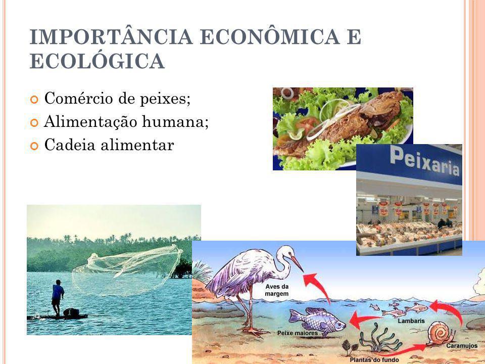 IMPORTÂNCIA ECONÔMICA E ECOLÓGICA Comércio de peixes; Alimentação humana; Cadeia alimentar