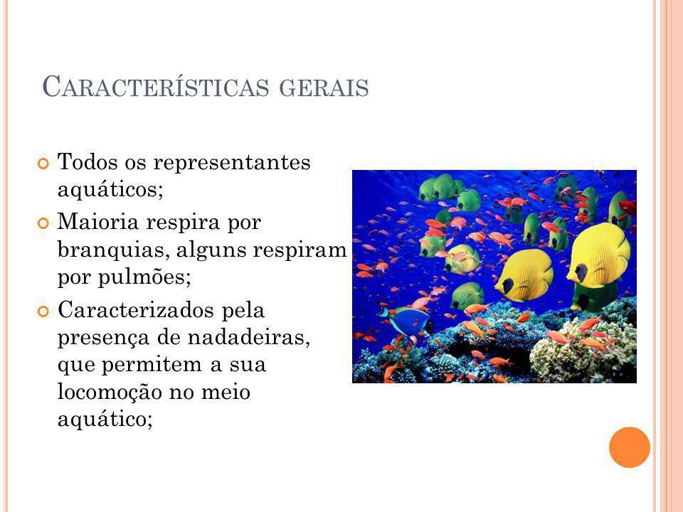 C ARACTERÍSTICAS GERAIS Todos os representantes aquáticos; Maioria respira por branquias, alguns respiram por pulmões; Caracterizados pela presença de
