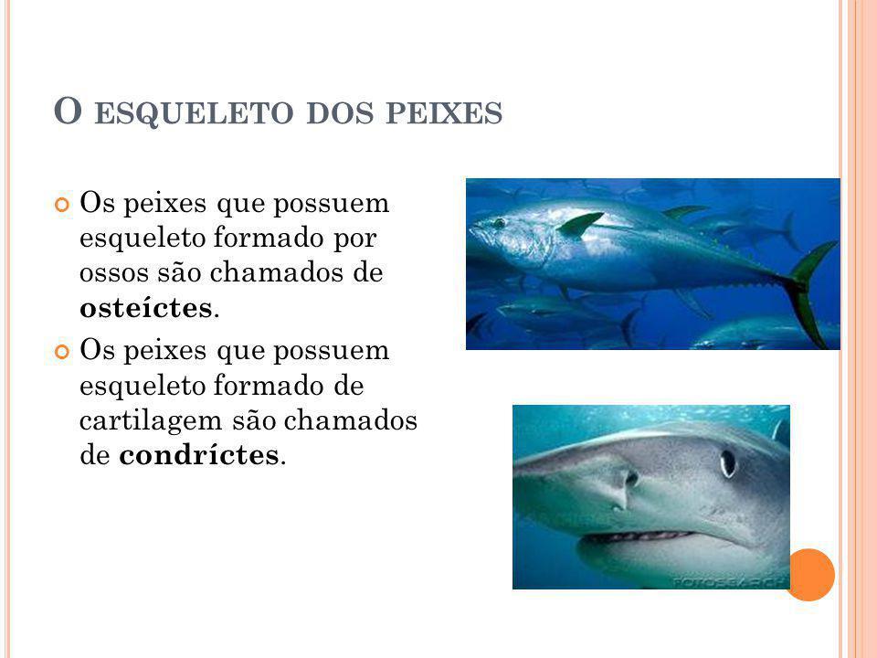 O ESQUELETO DOS PEIXES Os peixes que possuem esqueleto formado por ossos são chamados de osteíctes. Os peixes que possuem esqueleto formado de cartila