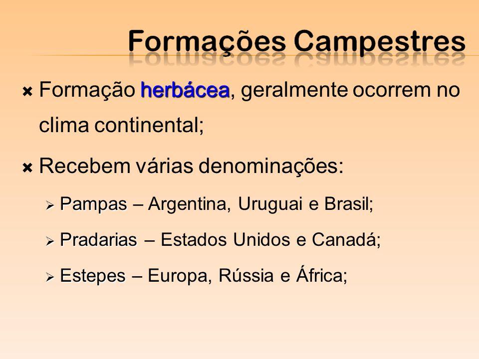 herbácea Formação herbácea, geralmente ocorrem no clima continental; Recebem várias denominações: Pampas Pampas – Argentina, Uruguai e Brasil; Pradarias Pradarias – Estados Unidos e Canadá; Estepes Estepes – Europa, Rússia e África;