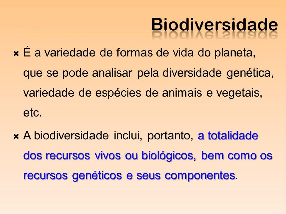 É a variedade de formas de vida do planeta, que se pode analisar pela diversidade genética, variedade de espécies de animais e vegetais, etc. a totali