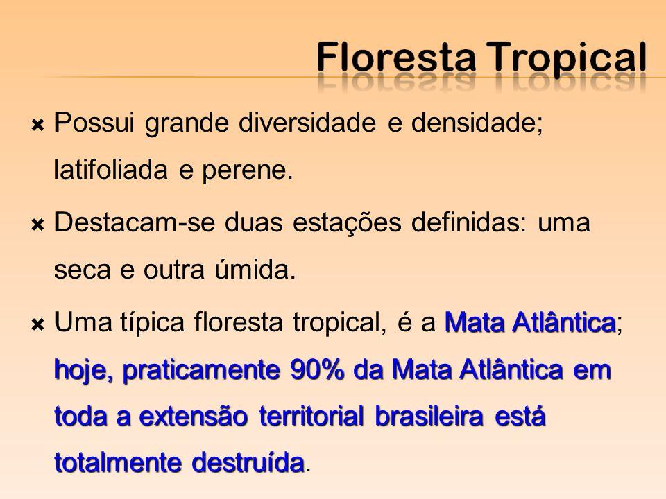 Possui grande diversidade e densidade; latifoliada e perene. Destacam-se duas estações definidas: uma seca e outra úmida. Mata Atlântica hoje, pratica