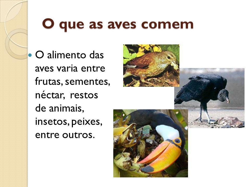 O que as aves comem O alimento das aves varia entre frutas, sementes, néctar, restos de animais, insetos, peixes, entre outros.