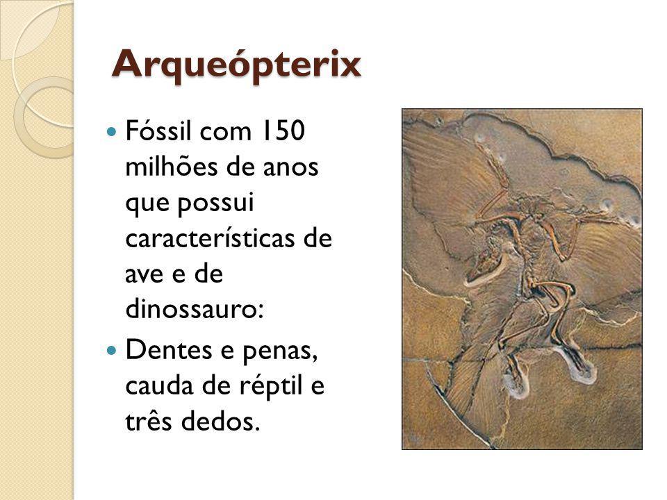 Arqueópterix Fóssil com 150 milhões de anos que possui características de ave e de dinossauro: Dentes e penas, cauda de réptil e três dedos.