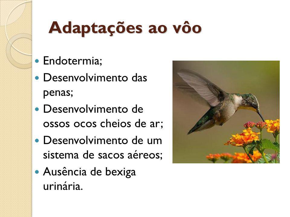 Adaptações ao vôo Endotermia; Desenvolvimento das penas; Desenvolvimento de ossos ocos cheios de ar; Desenvolvimento de um sistema de sacos aéreos; Au