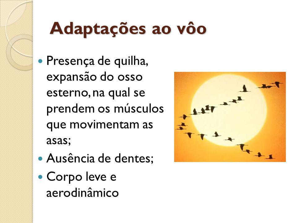 Adaptações ao vôo Presença de quilha, expansão do osso esterno, na qual se prendem os músculos que movimentam as asas; Ausência de dentes; Corpo leve