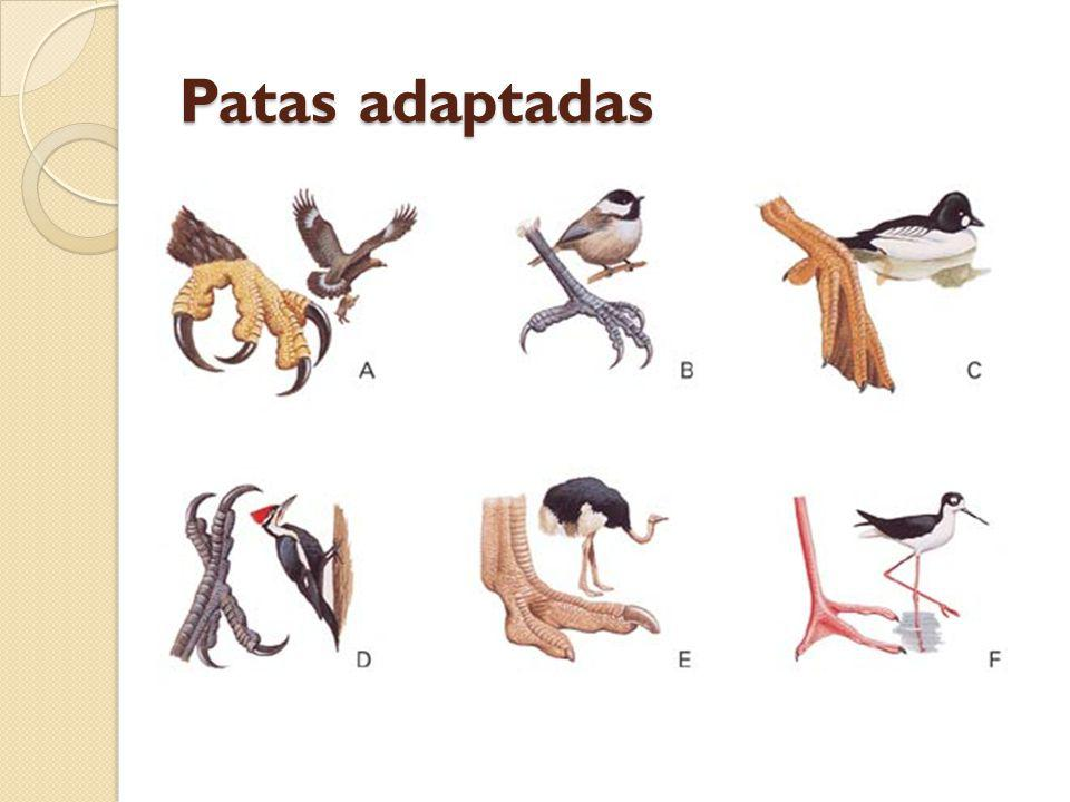 Sistema digestório das aves Sistema digestório completo.