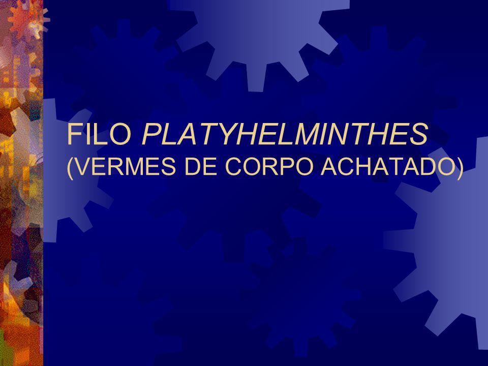 FILO PLATYHELMINTHES (VERMES DE CORPO ACHATADO)