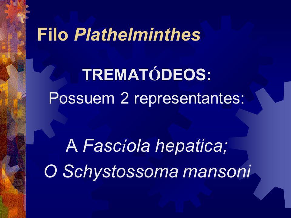 Filo Plathelminthes TREMAT Ó DEOS: Possuem 2 representantes: A Fasc í ola hepatica; O Schystossoma mansoni