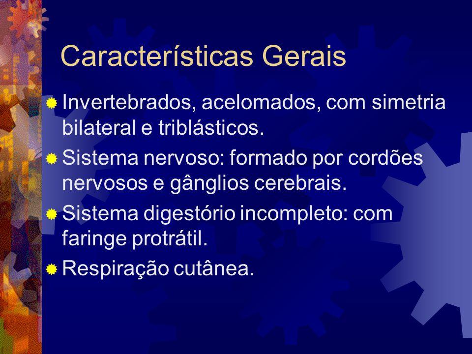 Classe Trematoda: parasitas, corpo simples, epiderme com cutícula protetora; sistema digestivo incompleto; dióicos com dimorfismo sexual.