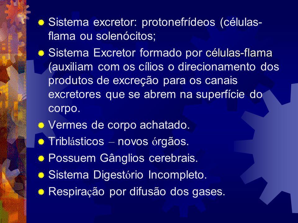 Sistema excretor: protonefrídeos (células- flama ou solenócitos; células-flama Sistema Excretor formado por células-flama (auxiliam com os cílios o di