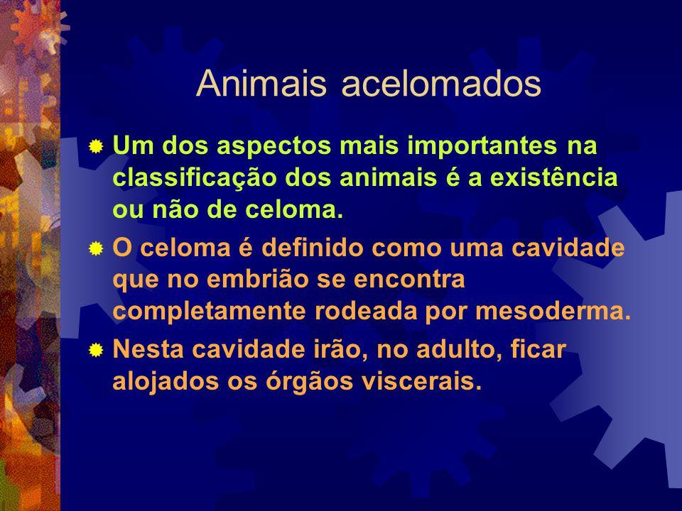 Animais acelomados Um dos aspectos mais importantes na classificação dos animais é a existência ou não de celoma. O celoma é definido como uma cavidad