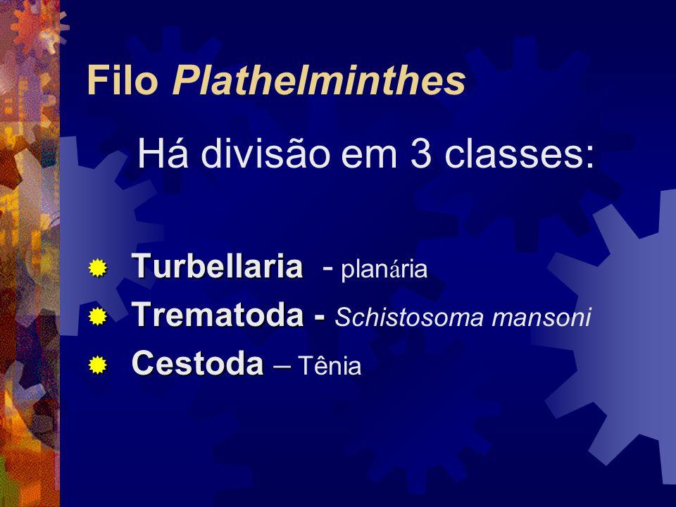 CLASSIFICAÇÃO Classe Turbellaria: vida livre, corpo simples com epiderme ciliada, sistema digestivo incompleto, são monóicos.