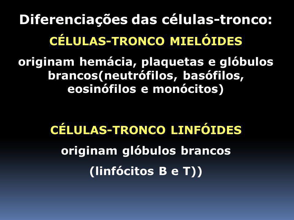 MEDULA ÓSSEA VERMELHA Rico em células-tronco medulares (São pluripotentes ou multipotentes = originam diversos tipos de células do sangue) As células-tronco medulares se originam de células Totipotentes (capazes de originar qualquer tipo de célula do corpo)
