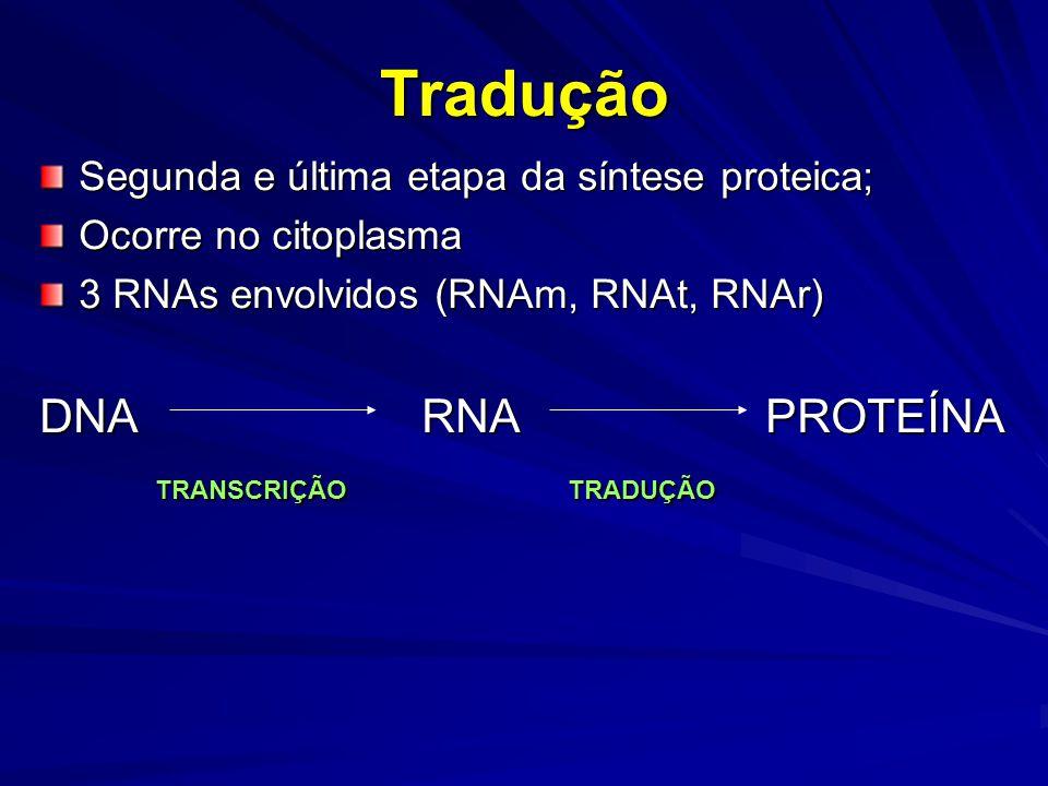 Tradução Segunda e última etapa da síntese proteica; Ocorre no citoplasma 3 RNAs envolvidos (RNAm, RNAt, RNAr) DNA RNA PROTEÍNA TRANSCRIÇÃO TRADUÇÃO T