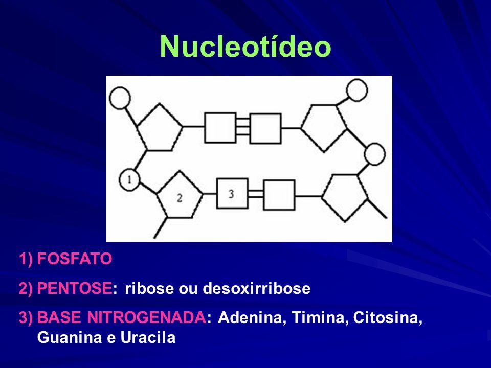 Nucleotídeo 1)FOSFATO 2)PENTOSE: ribose ou desoxirribose 3)BASE NITROGENADA: Adenina, Timina, Citosina, Guanina e Uracila