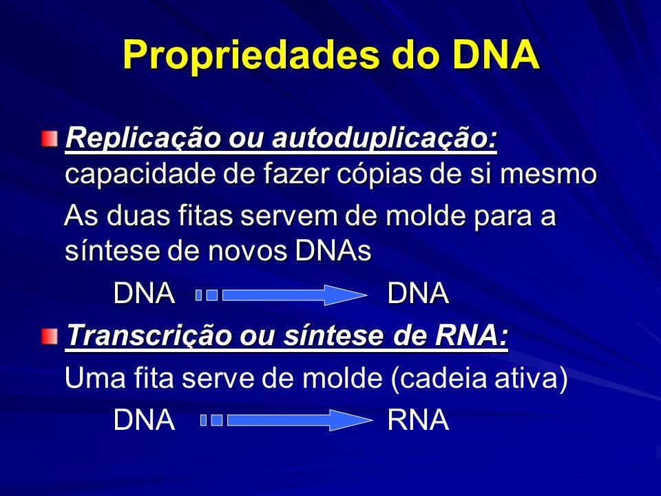 Propriedades do DNA Replicação ou autoduplicação: capacidade de fazer cópias de si mesmo As duas fitas servem de molde para a síntese de novos DNAs As