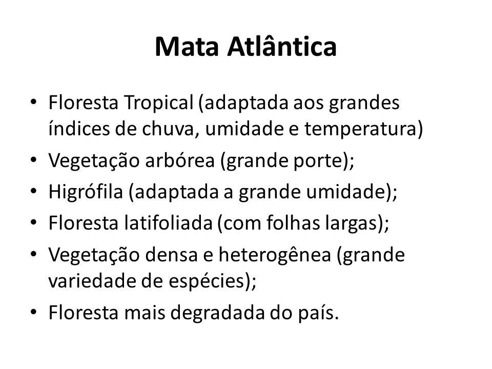 Mata Atlântica Floresta Tropical (adaptada aos grandes índices de chuva, umidade e temperatura) Vegetação arbórea (grande porte); Higrófila (adaptada a grande umidade); Floresta latifoliada (com folhas largas); Vegetação densa e heterogênea (grande variedade de espécies); Floresta mais degradada do país.
