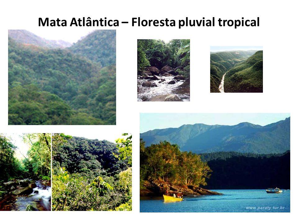 Mata Atlântica – Floresta pluvial tropical