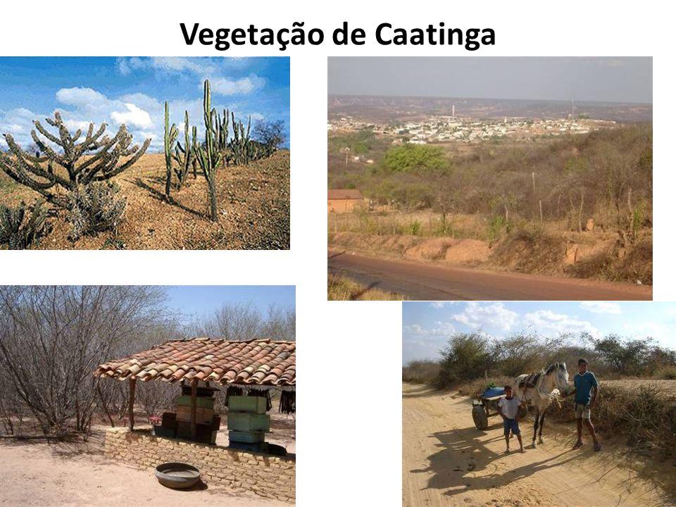 Vegetação de Caatinga
