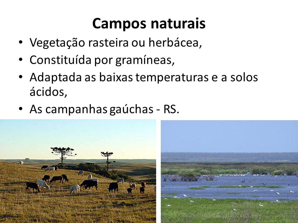 Campos naturais Vegetação rasteira ou herbácea, Constituída por gramíneas, Adaptada as baixas temperaturas e a solos ácidos, As campanhas gaúchas - RS.