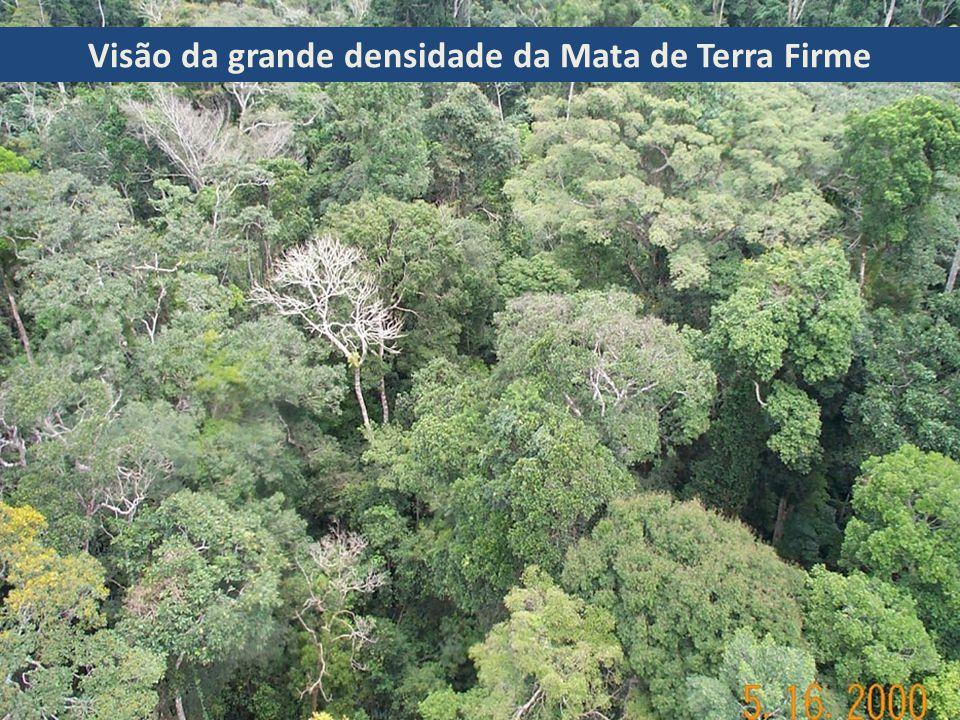 Floresta Amazônica – Mata de Terra Firme Ocupam a maior parte da região e não são inundadas pelas cheias dos rios.É uma formação densa, úmida e escura (a copa das árvores forma um telhado que pode reter até 95% da luz solar).