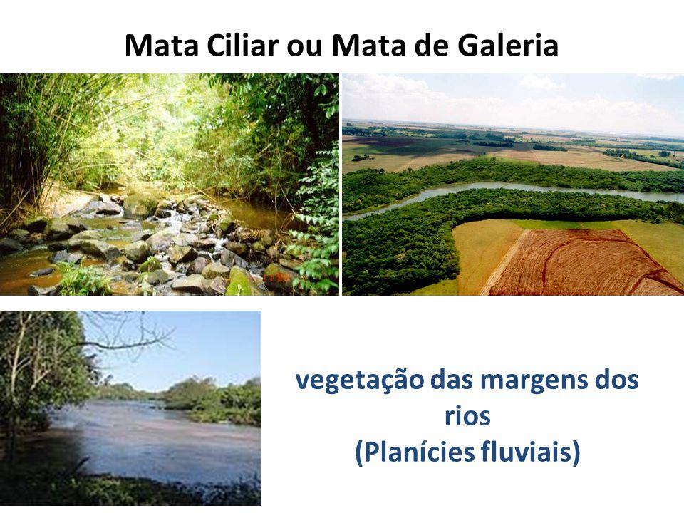 Mata Ciliar ou Mata de Galeria vegetação das margens dos rios (Planícies fluviais)