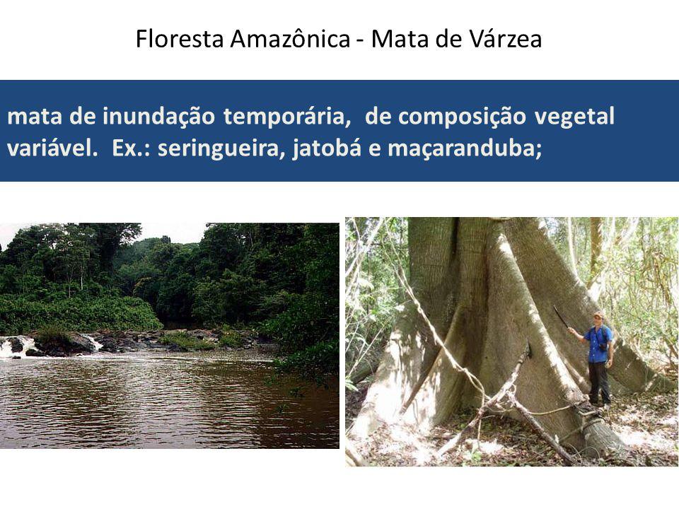 Mata das Araucárias Floresta Subtropical (adaptada as baixas temperaturas); Vegetação arbórea (grande porte); Floresta Acicufoliada (com folhas finas); Vegetação aberta e homogênea (pouca variedade de espécies).