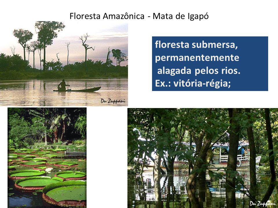 Floresta Amazônica - Mata de Igapó floresta submersa, permanentemente alagada pelos rios.