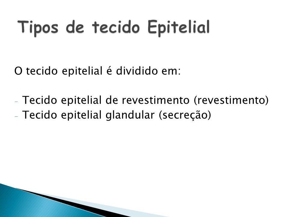 O tecido epitelial é dividido em: - Tecido epitelial de revestimento (revestimento) - Tecido epitelial glandular (secreção)
