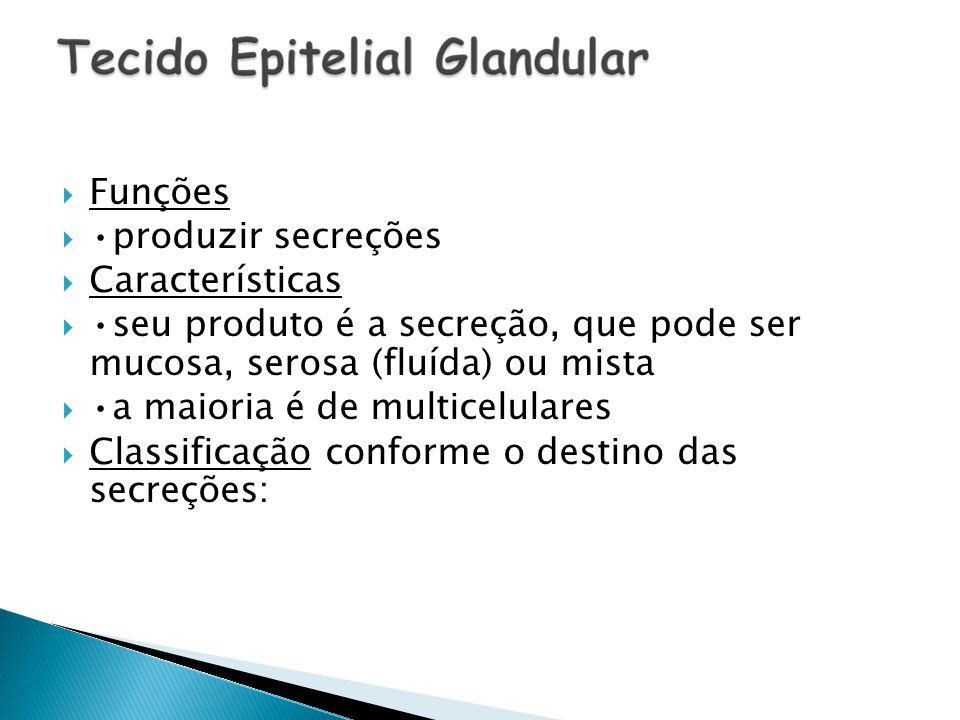 Glândula exócrina : lança sua secreção para fora dos vasos sanguíneos.