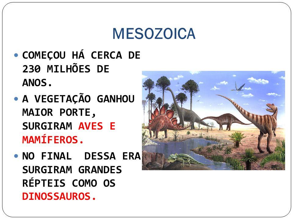 MESOZOICA COMEÇOU HÁ CERCA DE 230 MILHÕES DE ANOS. A VEGETAÇÃO GANHOU MAIOR PORTE, SURGIRAM AVES E MAMÍFEROS. NO FINAL DESSA ERA SURGIRAM GRANDES RÉPT
