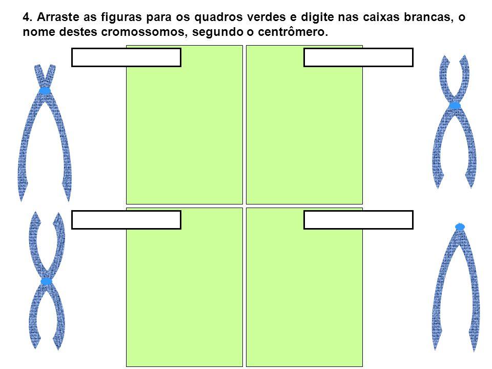 4. Arraste as figuras para os quadros verdes e digite nas caixas brancas, o nome destes cromossomos, segundo o centrômero.
