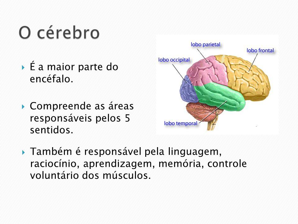 É a maior parte do encéfalo. Compreende as áreas responsáveis pelos 5 sentidos. Também é responsável pela linguagem, raciocínio, aprendizagem, memória