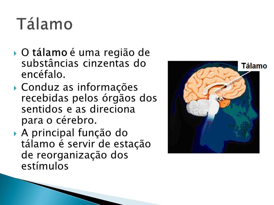 O tálamo é uma região de substâncias cinzentas do encéfalo. Conduz as informações recebidas pelos órgãos dos sentidos e as direciona para o cérebro. A