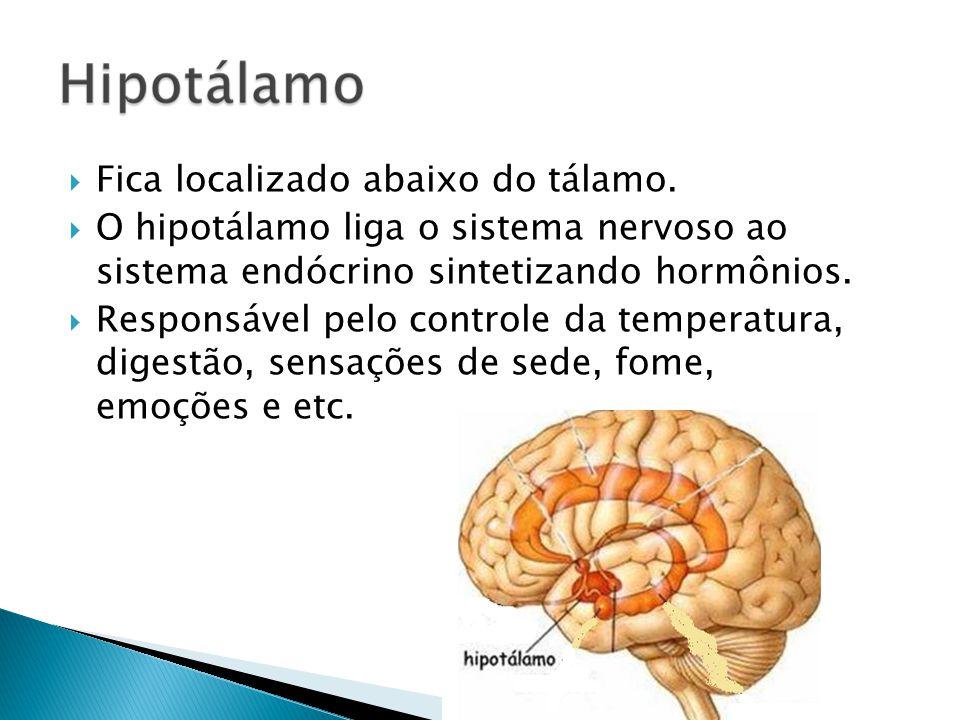 Fica localizado abaixo do tálamo. O hipotálamo liga o sistema nervoso ao sistema endócrino sintetizando hormônios. Responsável pelo controle da temper