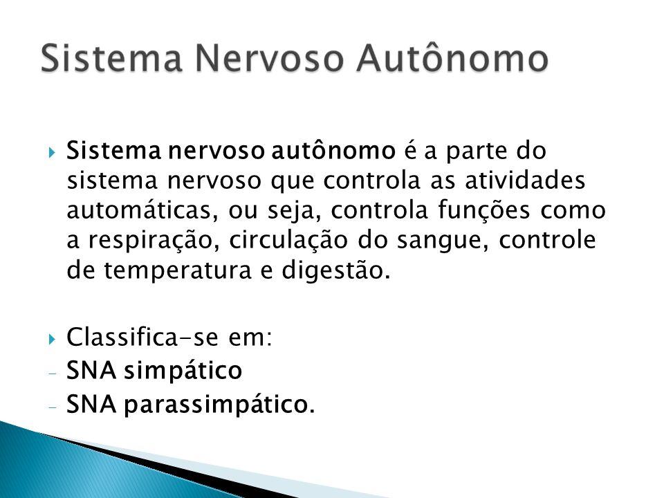 Sistema nervoso autônomo é a parte do sistema nervoso que controla as atividades automáticas, ou seja, controla funções como a respiração, circulação
