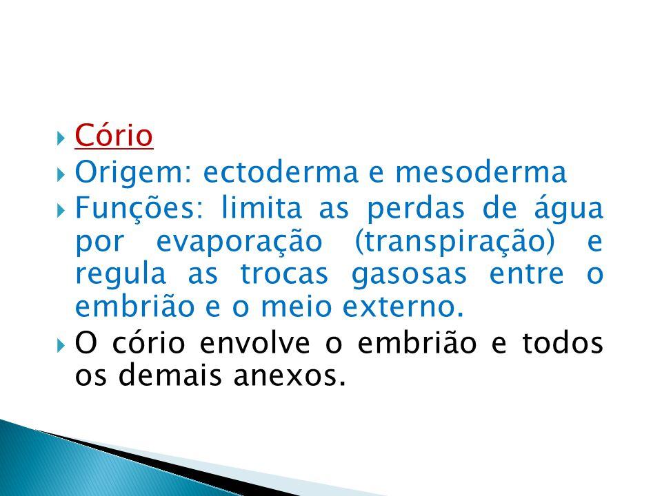 Cório Origem: ectoderma e mesoderma Funções: limita as perdas de água por evaporação (transpiração) e regula as trocas gasosas entre o embrião e o mei