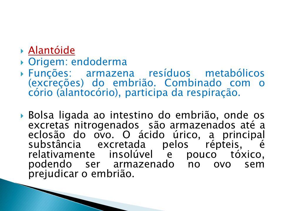 Alantóide Origem: endoderma Funções: armazena resíduos metabólicos (excreções) do embrião. Combinado com o cório (alantocório), participa da respiraçã