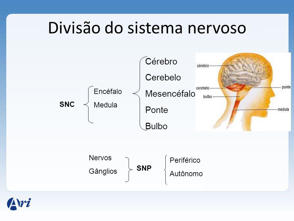 Neurotransmissores estão presentes em vesículas na terminação do axônio. Chegada do impulso na terminação resulta na liberação dos neurotransmissores