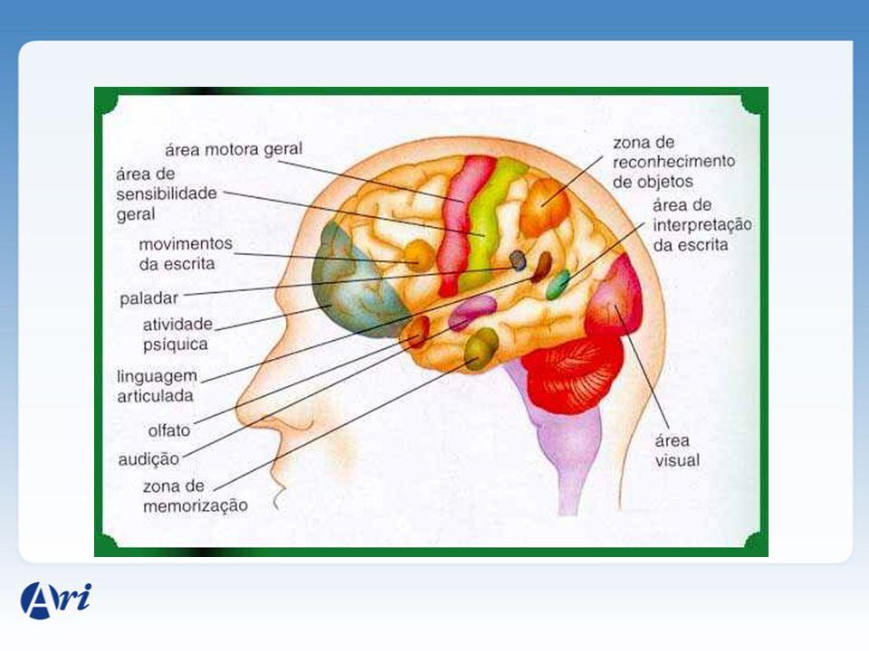 Parte mais desenvolvida do encéfalo Relacionado com o pensamento, memória, fala, inteligência, sentidos, emoções. Hemisfério direito: criatividade e h