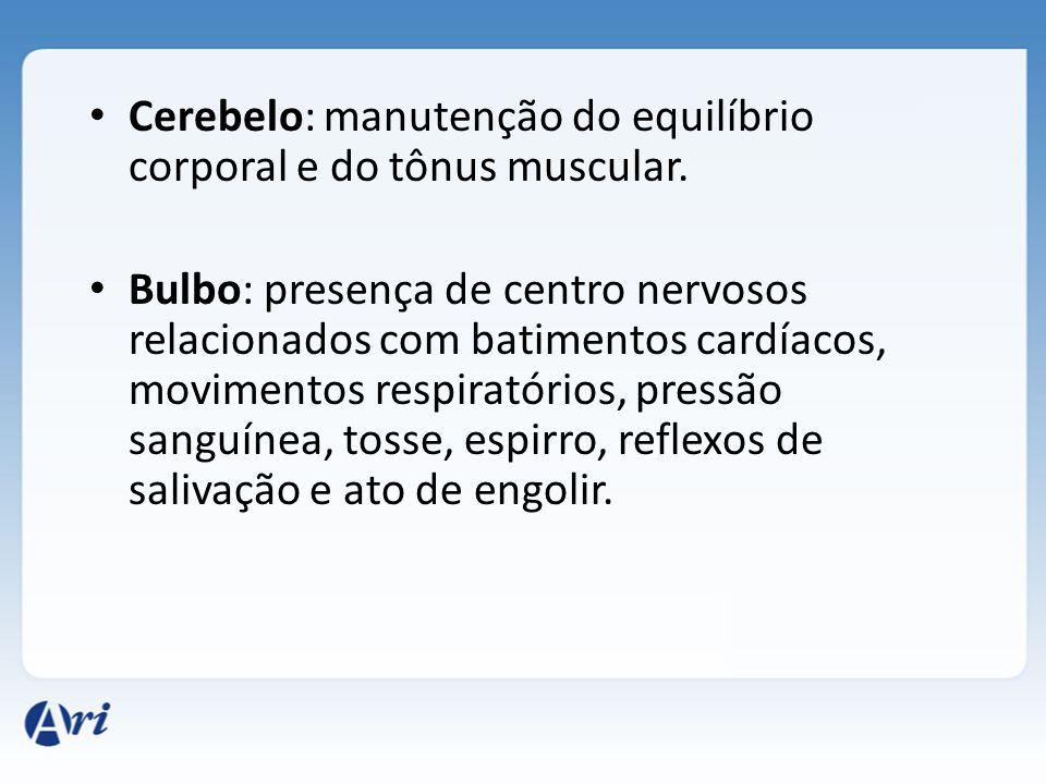 CÉREBRO- Corte Sagital CORPO CALOSO HIPÓFISE HIPOTÁLAMO TÁLAMO PONTE MEDULA CEREBELO Em coordenação regulam várias atividades do corpo O hipotálamo de