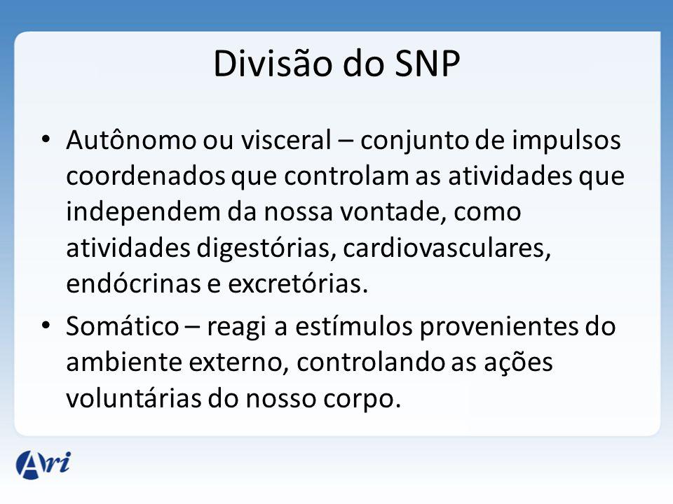DivisãoPartes Funções Gerais Sistema Nervoso Central (SNC) Sistema Nervoso Periférico (SNP) Encéfalo e Medula Espinhal Nervos e gânglios Processament