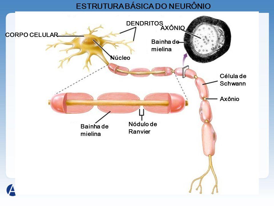 Componentes do sistema nervoso Dentre as células que constituem esse sistema, podemos citar: Neurônio – são células especializadas na condução de impu